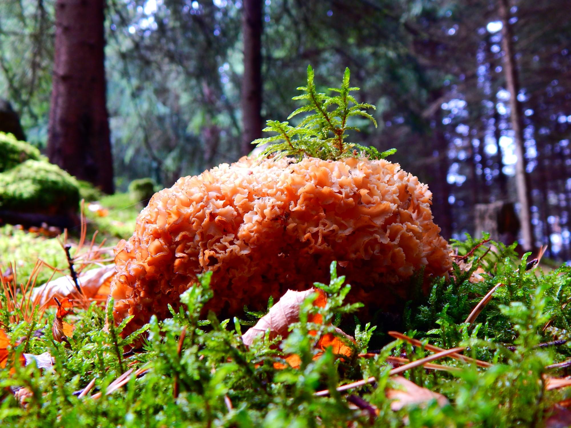 V okolních lesích je možnost houbaření