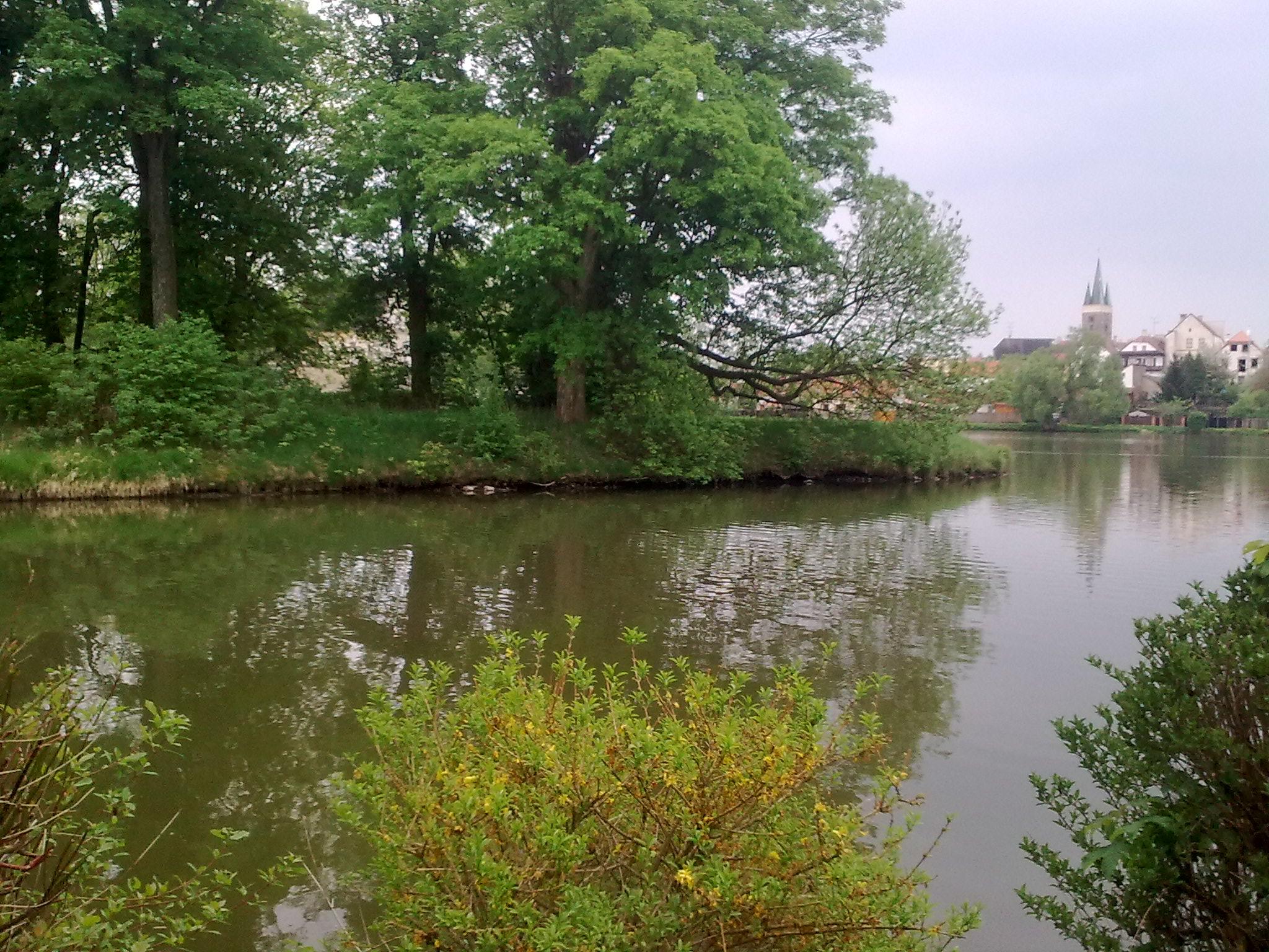 Štěpnický rybník - ostrov