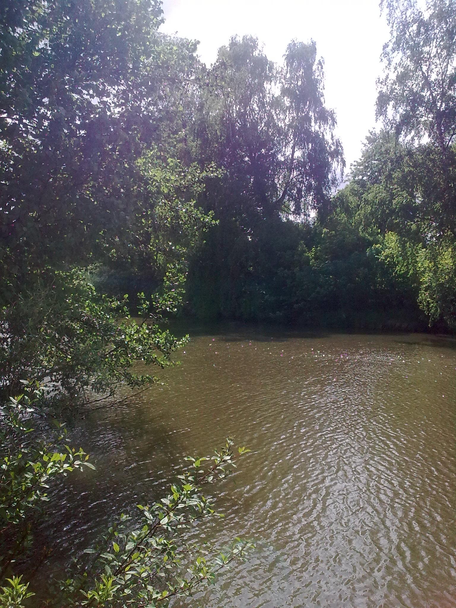 Pohled ze zahrady na Štěpnický rybník